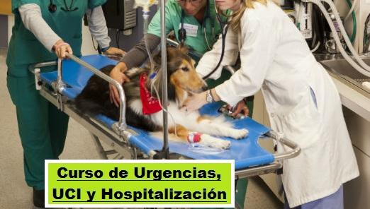 URGENCIA,   UCI   Y   HOSPITALIZACION