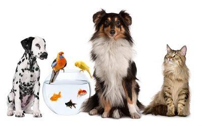 TEGUMENTOS ANIMALES (PIELES DE ANIMALES)
