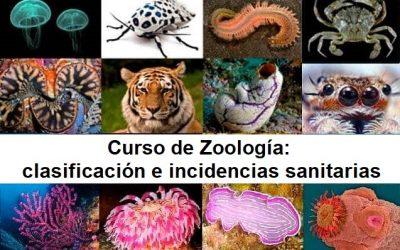 INTRODUCCIÓN A LA ZOOLOGÍA: clasificación e incidencias sanitarias