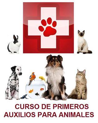 CURSO DE PRIMEROS AUXILIOS PARA ANIMALES