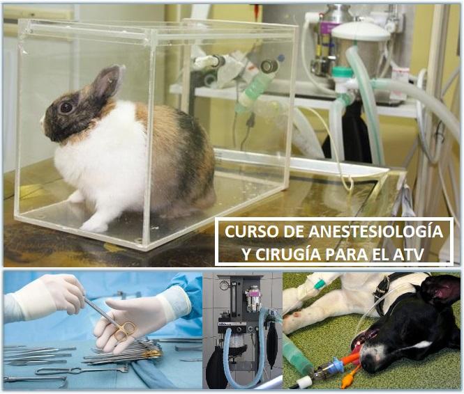 Curso de cirugía y anestesiología para el ATV